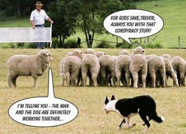 herder_hond
