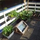 种植自己的蔬菜