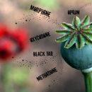 A ka monopoli holandez dhe britanik opium (heroinë) të zhvendosur drejt NATO-s?
