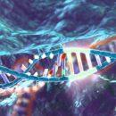 Pembangunan berbahaya: negeri mahu mengembangkan embrio manusia dan menyesuaikan diri dengan DNA