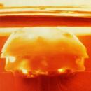 Kërcënimi bërthamor i Koresë së Veriut kundrejt kërcënimit më të madh për njerëzimin