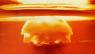 De nukleêre bedriging fan Noard-Korea hat de grutste bedriging fan 'e minske