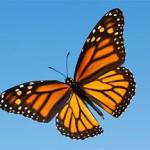 De vlinder als symbool voor vrijheid en meer