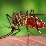 Muggen die vaccinatie toedienen hebben de toekomst