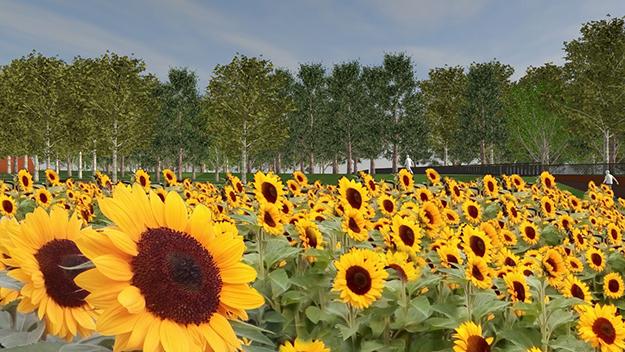zonnebloemen-mh17-monument