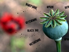 Heeft het Nederlandse en Britse opium(heroïne)monopolie zich verlegd richting de NAVO?
