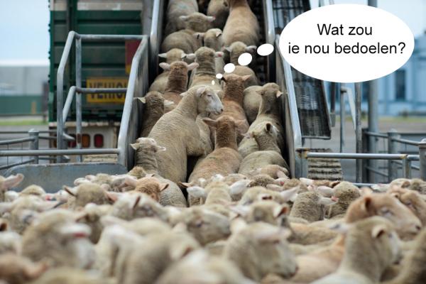https://www.martinvrijland.nl/wp-content/uploads/2018/11/schapen-slachtbank-e1541457151574.png